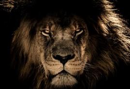 znaczenie snu Sen o lwie