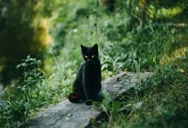 znaczenie snu Sen o czarnym kocie