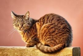 znaczenie snu Sen o kocie