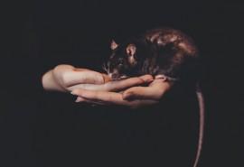 znaczenie snu Sen o szczurzym ogonie