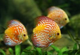 znaczenie snu Sen o rybach