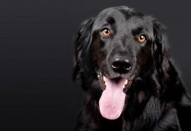 znaczenie snu Sen o psie czarnym