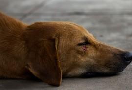 znaczenie snu Sen o zranionym psie