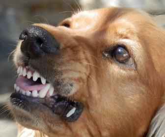 znaczenie snu Sen o gryzącym psie