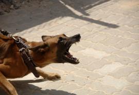 znaczenie snu Sen o kocie pogryzionym przez psa
