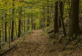 znaczenie snu Sen o lesie