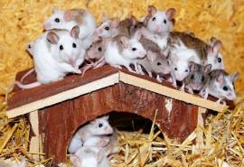sennik Gryzące myszy