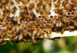 znaczenie snu Sen o pszczołach