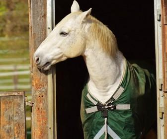 znaczenie snu Sen o białym koniu