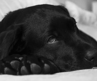 znaczenie snu Sen o czarnym psie