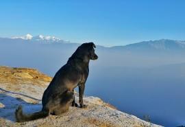 znaczenie snu Sen o psie