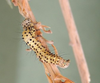 sennik Sen o białych  robakach