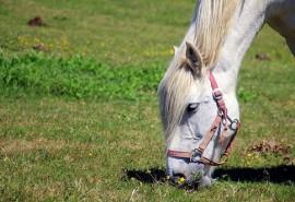 sennik Pędzące konie