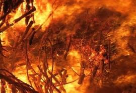 sennik Pożar lasu