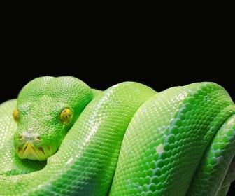 znaczenie snu Sen o wężu