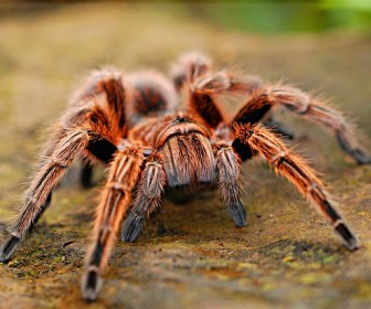 znaczenie snu Sen o pająku