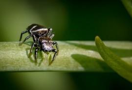 znaczenie snu Sen o małym pająku