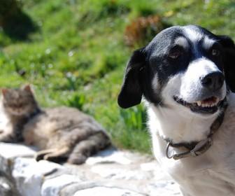sennik Wściekły pies gryzący kota