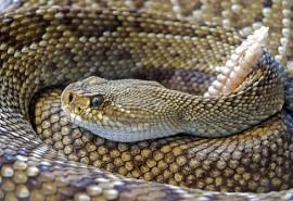 sennik Zabicie węża